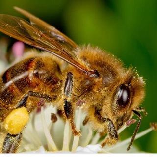 ?فراورده های زنبور?